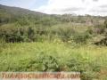 Vendo 6000 M2 De Terreno En Venezuela ,serrania Del Edo Falcon